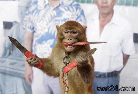 میمونی که با چاقو نشانه گیری می کند در چین