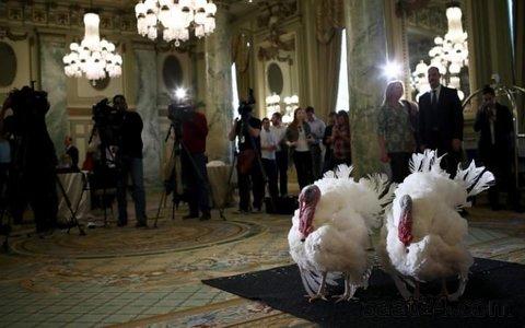 تاتر و توت دو بوقلمونی که توسط باراک اوباما مورد عفو قرار گرفتند در سالگرد روز شکرگزاری نمایش داده شدند