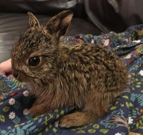 یک جانور کوچک که توسط خانواده ای در کودکی بزرگ شده پس از رهایی در طبیعت به خانواده ای که اورا پرورش دادن سر می زند در انگلیس