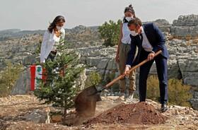 ماکرون رئیس جمهوری فرانسه در حال کاشت درخت کاج در بیروت به مناسبت صدمین سالگرد استقلال لبنان