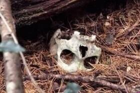 حقایق عجیب از جنگلی برای خودکشی افراد!