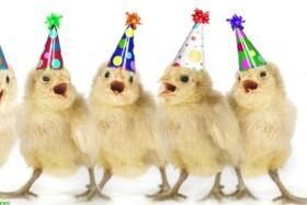 مرغ ها چه زمانی خوشحال می شوند؟!