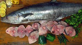 خواص ماهی | خواص ماهی برای چشم | خواص انواع ماهی