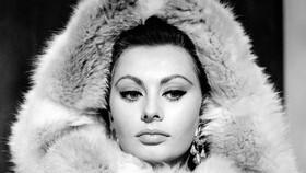 سوفیا لورن | زندگینامه سوفیا لورن | عکس های سوفیا لورن