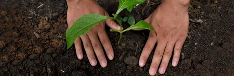 رونمایی از برنامه های شرکت نستله برای  توسعه کشاورزی احیاکننده